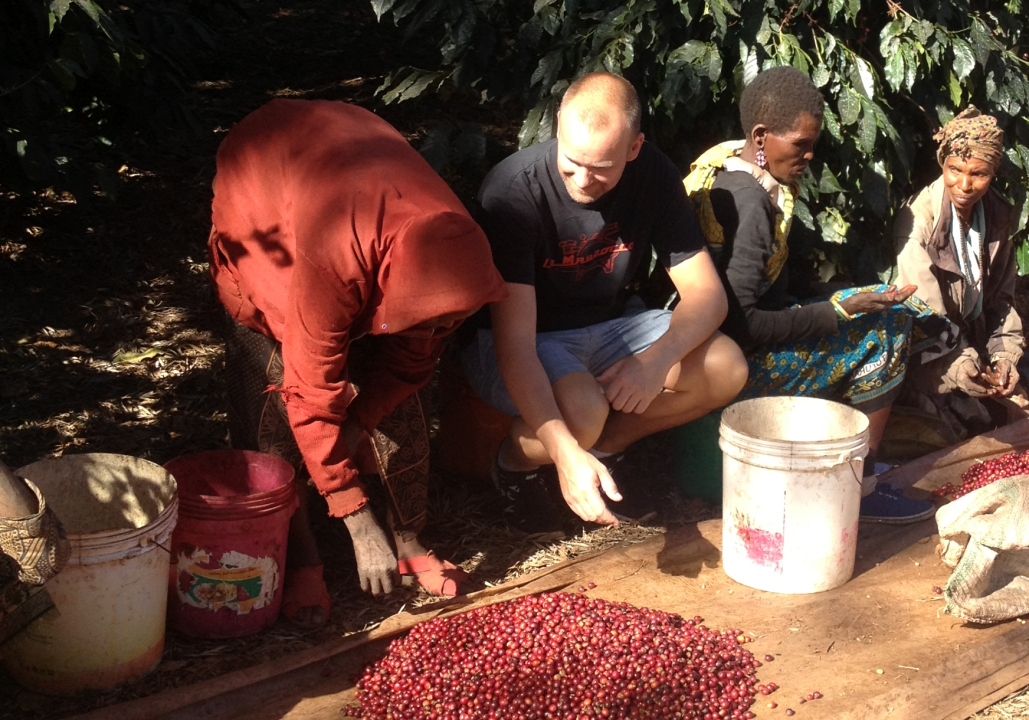 Kaffesortering i Tanzania